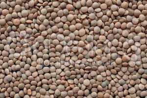 Lentils picture
