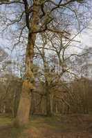 Ashridge woodlands