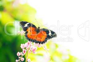 Butterfly on flower with copy space
