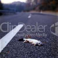 Road Casualty