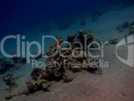 korallen am steilhang