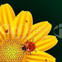 chamomile and ladybugs