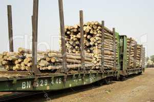 Logs in Transit 4
