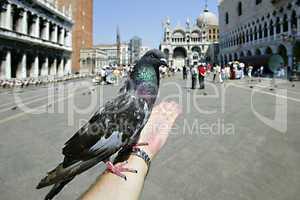 The photographer feeding the pigeon