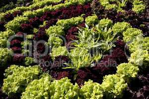 Vegetables in helical pattern