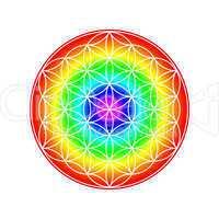 Chakra Farben Blume des Lebens 2