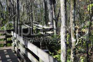 White ibis on railing