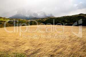 Meadow and Cuernos del Paine