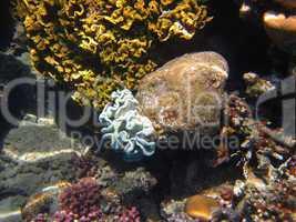schoene koralle
