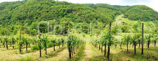 Wald und Weingärten