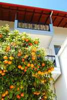 House at the Greek village and orange tree with fruits, Pieria,