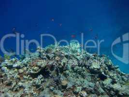 korallen huegel
