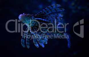 Feuerfisch Lionfish Unterwasser