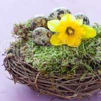 Osternest mit Narzisse / easter nest with daffodil