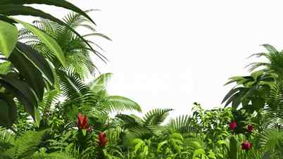 Growing tropical forest, alpha channel