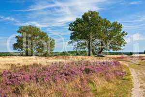Lüneburger Heide, Heidelandschaft mit Eichen