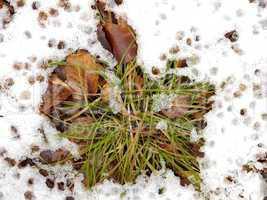 Gräser und Blätter im Schnee