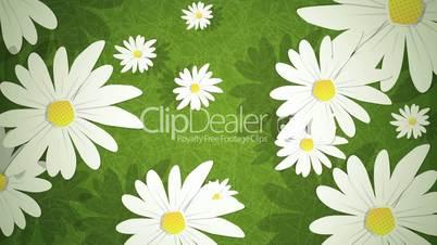 Summer Daisies Loop HD
