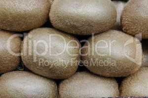 Kiwifrüchte (Actinidia speciosa)