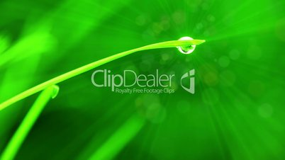 A drop of water on a blade of grass. Rays and particles