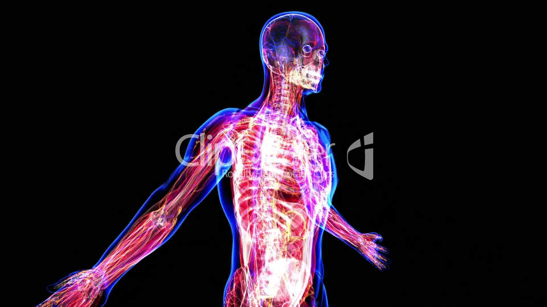 Anatomy Of The Human Body Royalty Free Video And Stock Footage