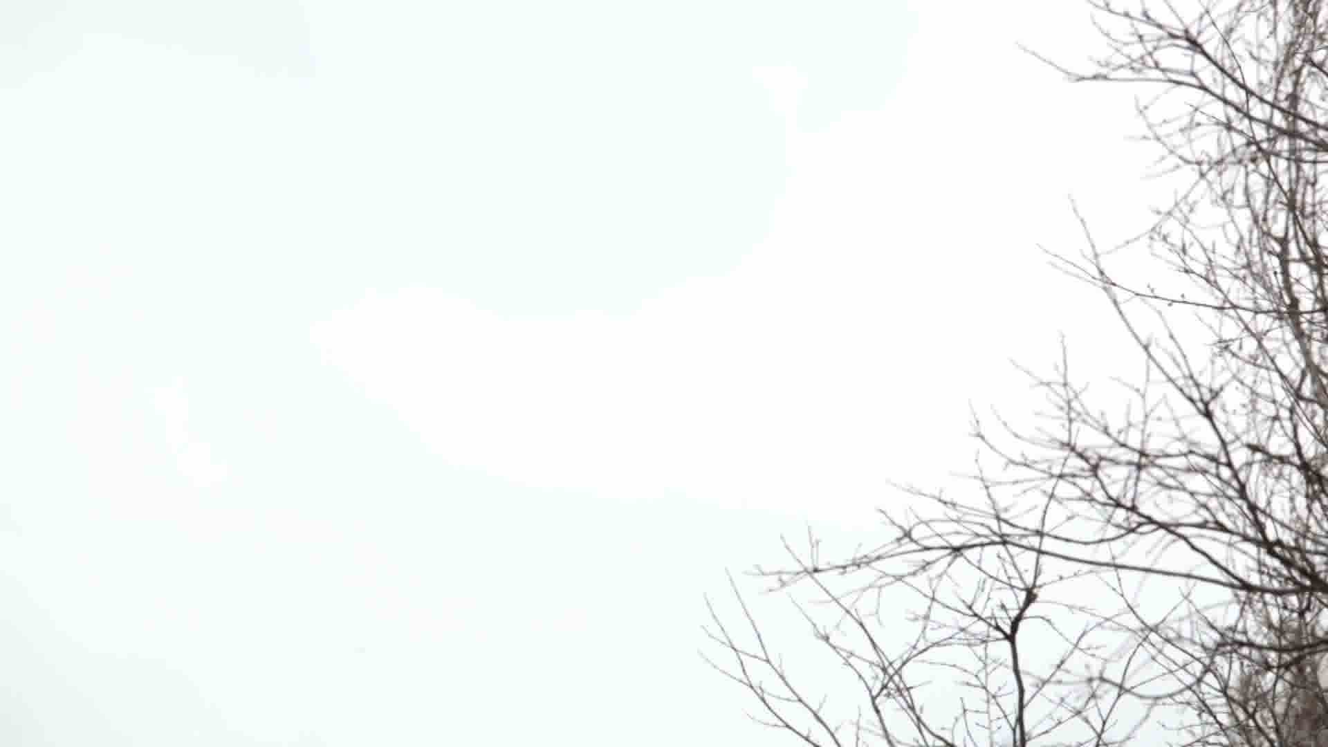 Tree branches on the background of white sky.: Royalty ...