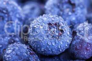 Wet Fresh Blueberries Berries closeup, backdrop