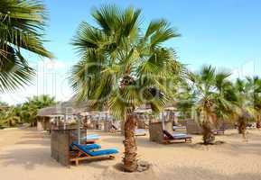 Palm tree on the beach at luxury hotel, Hurghada, Egypt