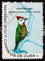 postage stamp cuba 1970 cuban green woodpecker, bird