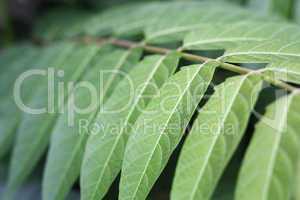 Pflanzen Bokeh