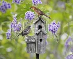 Birds On A Bird House