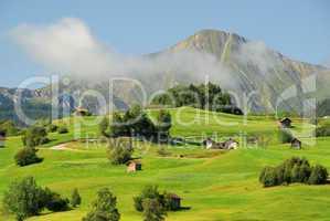 Fiss Alm - Fiss alp pasture 08