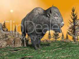 Bison by sunset - 3D render