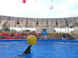 show with dolphins in delphinariums