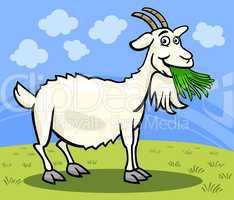 goat farm animal cartoon illustration