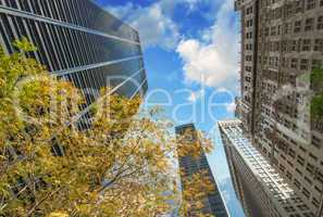 New York City. Upward view of Manhattan Buildings with trees
