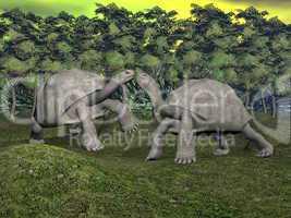 Galapagos tortoises kiss - 3D render