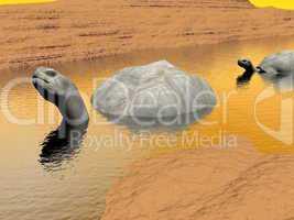 Galapgos tortoises in water - 3D render