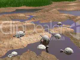 Galapgos tortoises relaxing - 3D render