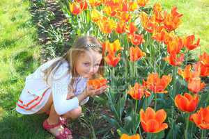 little girl smells tulips on the flower-bed