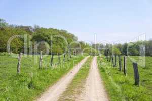 Feldweg im Geltinger Birk, Schleswig-Holstein, Deutschland