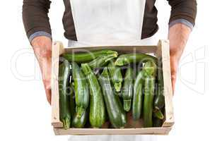 Freshly picked zucchini