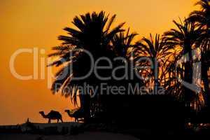 palmen in wueste bei sonnenuntergang