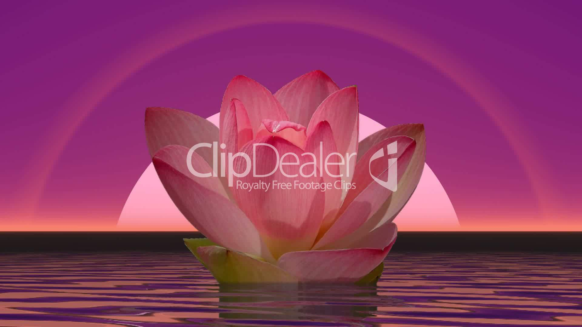 Lily Flower And Moonlight 3d Render Royalty Free Video And Stock