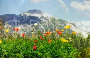 mohnblumen vor einer bergkulisse poppies in front of a mountain