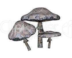 Mushroom - 3D render