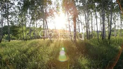 Steadycam shot - flying through forest