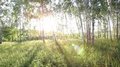 Steadycam shot - flying through forest.