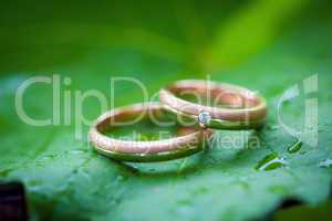 two wedding rings on a leaf