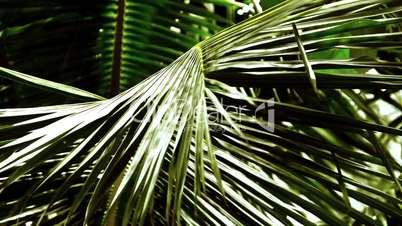 Palm Tree Leaf Swaying Gently